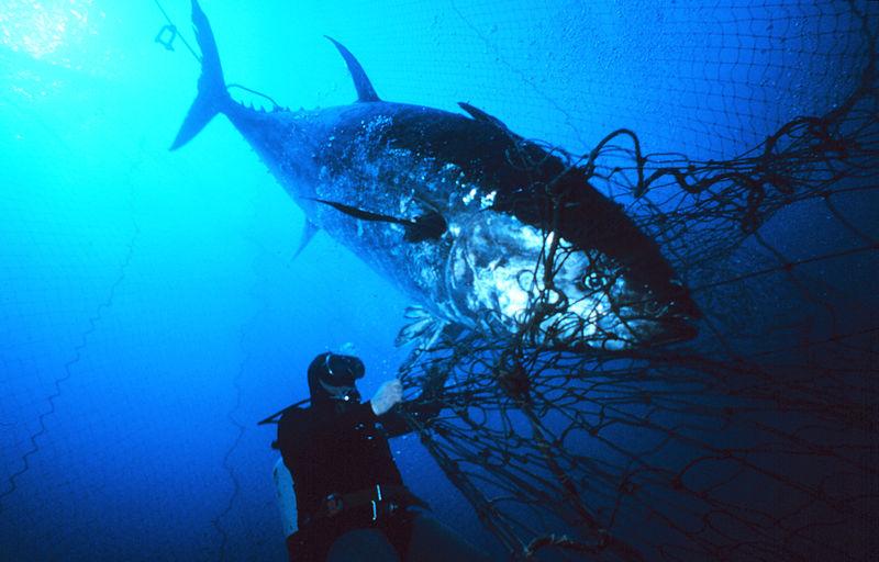 Overbevissing, drink kraanwater, karaf, kan, drinkfles