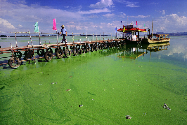 13 Bedreigingen En Oplossingen Om De Oceaan Te Redden Krnwtr