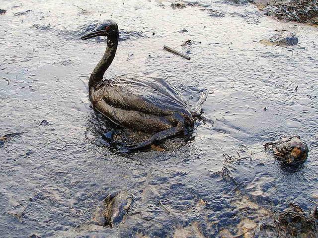 Olie vogel kraanwater drink KRNWTR